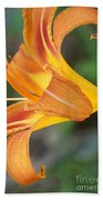 Glow Of A Lily Beach Towel