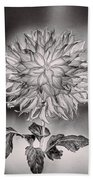 Glowing Dahlia Beach Towel