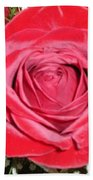 Glowing Rose Beach Towel