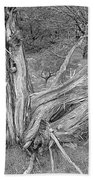 Gnarled Cedar Stump Beach Towel