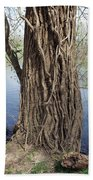 Gnarly Tree 2 Beach Towel
