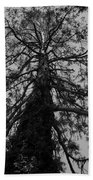 Gnarly Tree Beach Towel