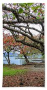 Gnarly Trees Of South Hilo Bay - Hawaii Beach Towel