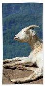 Goat Enjoy The Sun Beach Towel