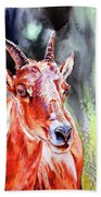 Goat From The Mountain Beach Towel