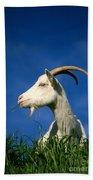 Goat Beach Sheet
