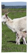 Goat With Just Born Little Goat Spring Scene Beach Towel