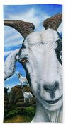 Goats Of St. Martin Beach Towel