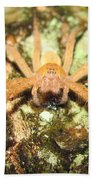 Gold Hunting Spider Beach Towel