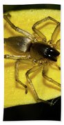 Golden Arachnid  Beach Towel