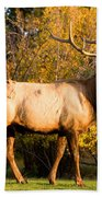 Golden Bull Elk Portrait Beach Towel