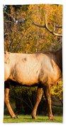 Golden Bull Elk Portrait Beach Sheet