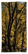 Golden Colors Of Autumn In New England  Beach Sheet
