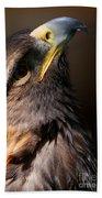 Golden Eagle Upwards Beach Towel by Sue Harper