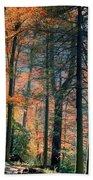Golden Forest Path Beach Towel
