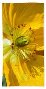 Golden Poppy Expose Beach Towel