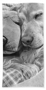 Golden Retriever Dog And Friend Beach Towel