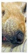 Golden Retriever Dog Little Tongue Beach Towel by Jennie Marie Schell