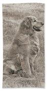 Golden Retriever Dog Sepia Beach Towel