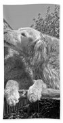 Golden Retrievers The Kiss Black And White Beach Towel