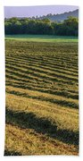 Golden Windrows Beach Towel