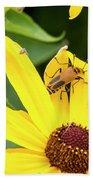 Goldenrod Soldier Beetle Beach Towel