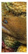 Goldentail Moray Beach Towel