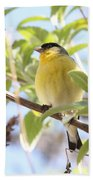 Goldfinch In Spring Tree Beach Towel