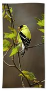 Goldfinch Suspended In Song Beach Towel