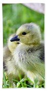 Goose Chick Beach Towel