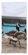 Goose Crossing Mayville Park Beach Towel