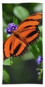 Gorgeous Close Up Of An Oak Tiger Butterfly In Nature Beach Towel