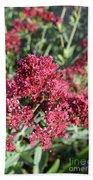 Gorgeous Cluster Of Red Phlox Flowers In A Garden Beach Sheet