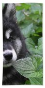 Gorgeous Fluffy Alusky Puppy Peaking Out Of Plants Beach Towel