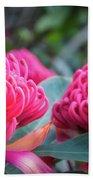 Gorgeous Waratah -floral Emblem Of New South Wales Beach Sheet