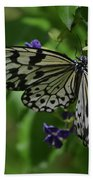 Gorgeous White Tree Nymph Butterfly With It's Wings Spread Beach Towel