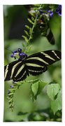 Gorgeous Zebra Butterfly On Some Blue Flowers Beach Towel