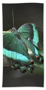 Gorgoeus Close Up Of This Emerald Swallowtail Butterfly  Beach Towel