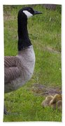 Goslings With Mother Goose Beach Towel