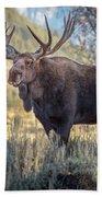 Grand Teton Moose Beach Towel