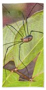 Grandaddy Long Legs Beach Towel