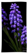 Grape Hyacinths Beach Towel