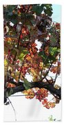 Grape Vine In Autumn Beach Towel