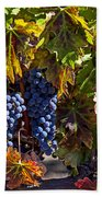 Grapes Of The Napa Valley Beach Towel