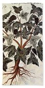 Grapevine, 1229 Beach Towel