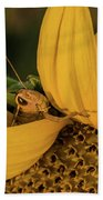 Grasshopper In Sunflower Beach Towel