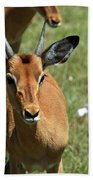 Grassland Deer Beach Towel