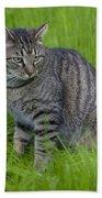 Gray Cat In Vivid Green Grass Beach Towel