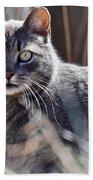 Gray Cat In Woods Beach Towel