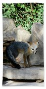 Gray Fox 4 Beach Towel